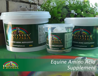 Equine Amino Acid Supplement