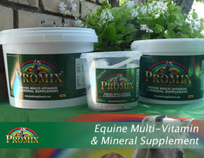 Equine Multi-Vitamin and Mineral Supplement
