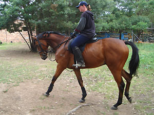 5yr TB gelding off the track - before
