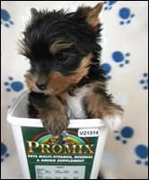 Sophia - born 19 July 2010 - A proper Promix Pup!!